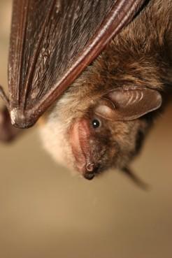 s' Avonds de tuin in en vleermuizen tellen: 'Ze zijn heel lief en zacht'