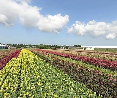 Agrarische open dag 'Bollenstreek in Bedrijf' dit jaar in De Zilk