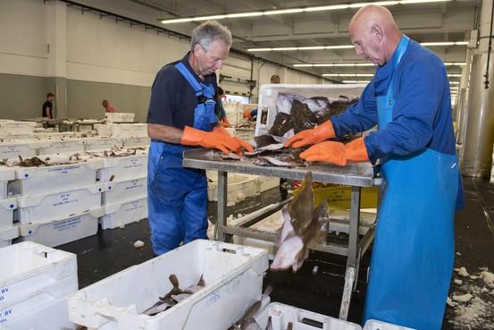 Zware tijden voor de afslag van Den Helder, de veiling laat onderzoeken hoe er meer met de IJmuidense visveiling kan worden samengewerkt