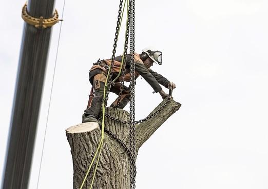 Slechte Schalkwijkse bomen krijgen roze logo: inwoners mogen bezwaar maken tegen kapping