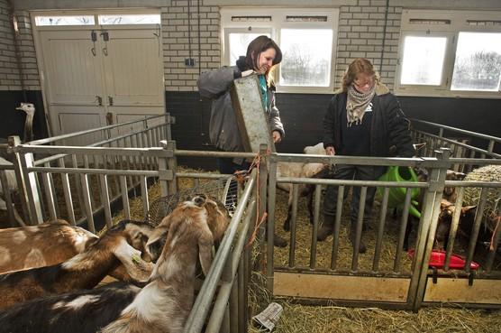 Extra geld voor kinderboerderijen Haarlemmermeer